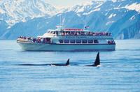 Seward Cruise with Dinner on Fox Island