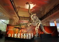 Australian Museum*
