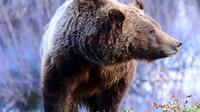 Yellowstone National Park and Wildlife Small-Group Tour