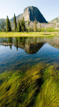 Yellowstone National Park Small-Group Wildlife Safari