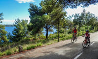 Split Bike Tour: City Highlights by Standard or Electric Bike