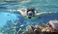 Cielo, Columbia and Palancar Reefs Snorkeling Tour*