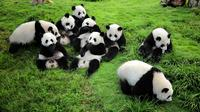 Chengdu Private Day Tour to Panda Base Wenshu Monastery and Peoples Park