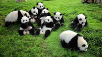 One-Way Airport Transfer with Giant Panda Bear Research Center in Chengdu Private Car Transfers