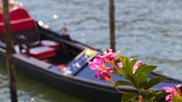 3-hour Venice: the Secret Gardens Discovering Walking tour