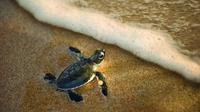 Turtle Spotting Tour in St Lucia in South Africa