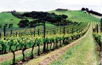 Waiheke Island Wine Tasting Tour from Auckland