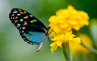 Rhodes Shore Excursion: Private Valley Of The Butterflies Day Trip