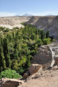 Atacama Salt Flat and Toconao Tour from San Pedro