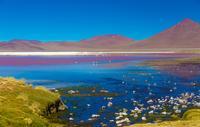Cejar and Tebenquiche Lagoons Tour from San Pedro de Atacama*
