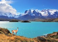 Full-Day Tour to Torres del Paine National Park from Puerto Natales*