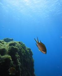 Lanzarote Scuba Diving Experience for Beginners