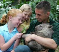 See wombats at Featherdale Wildlife Park*
