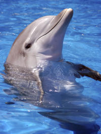 Private Tour: Muscat Sightseeing Tour Including Dolphin Watching Cruise