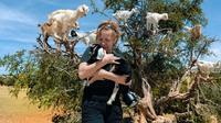 Goats climbing argan tree