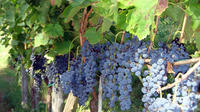 Vineyard Tour & Wine Tasting at one of the most famous wine-production