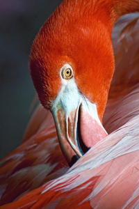General Admission to Flamingo Gardens Admission in Fort Lauderdale