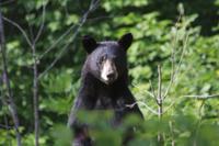 Alaska Rainforest Sanctuary Walking Tour and Wildlife Encounter