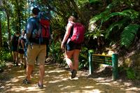 Self-Guided Queen Charlotte Track Walk from Picton