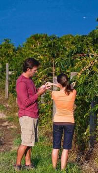Kona Tour: Coffee Plantation, Kealakekua Bay, Kaloko-Honokohau Park and Bee Farm
