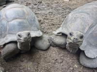 Cayman Turtle Farm Tour