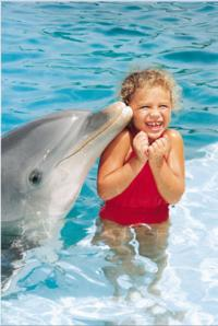 Blue Lagoon Dolphin Swim from Nassau