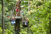 Cape Tribulation Jungle Surfing Canopy Tour