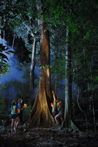 Daintree Rainforest Night Walk from Cape Tribulation