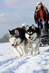 Lapland Christmas Family-Friendly Husky Sled Ride from Rovaniemi