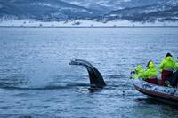 Tromso Whale Safari by RIB