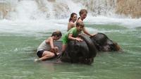 Luang Prabang Elephant Adventure Day Tour