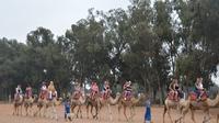 agadir-promenade-dos-de-chameau