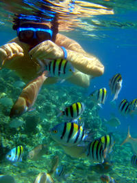 Kealakekua Bay Snorkeling Tour With Optional Honaunau Bay