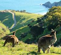 McLaren Vale and Fleurieu Peninsula Day Trip by 4WD Including Gourmet Picnic Lunch