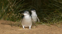 Small-Group Phillip Island and Wildlife Highlights Day Trip from Melbourne Including Penguin Plus Viewing Platform
