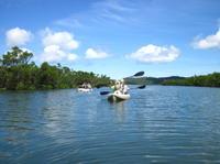 Iriomote Island Kayaking Eco-Tour Including Sangara Falls Hike