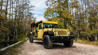 Private Tour: Everglades Sightseeing at Big Cypress National Preserve