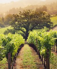 Private Tour: Villány Wine Country Day Trip from Budapest Including Lunch