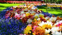 Amsterdam Day-Trip Combo: Keukenhof Gardens and Zaanse Schans Windmill Village