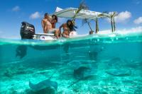 Snorkel with sharks and stingrays*