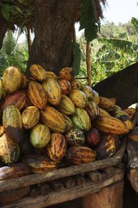 Chocolate Tour from Santo Domingo