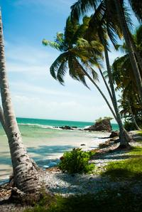 All-Inclusive Samaná Day Trip by Air from Punta Cana