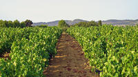 Private Provence Wine Tour with Tastings from Marseille