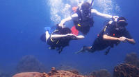 5-Day PADI Open Water Diving Certification Course in Koh Tao - Introductory Level