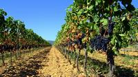 Full-day Luberon Tour from Avignon Including Gordes and Roussillon