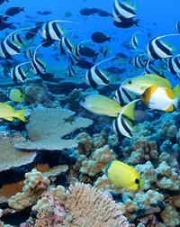 Los Cabos Snorkeling Tour to Chileno Bay and Santa Maria Cove