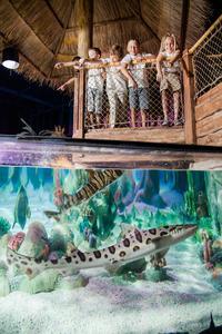 SEA LIFE Michigan Aquarium