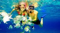 Snorkeling Day Trip to Isla Catalina from La Romana