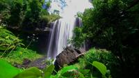 Atherton Tablelands Tour from Cairns