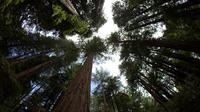 Muir Woods and Sausalito Tour Afternoon Tour